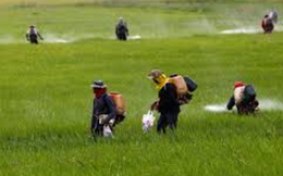Nông dược HAI: Trúng vụ hè thu, lợi nhuận quý 2 tăng 78% so với cùng kỳ