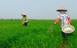 Hóa chất Lâm Thao: Doanh thu sụt giảm mạnh, 9 tháng lãi 110 tỷ đồng