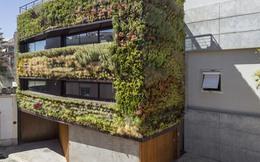 Căn nhà 4 tầng phủ toàn cây xanh luôn thơm ngát mùi hương quanh năm