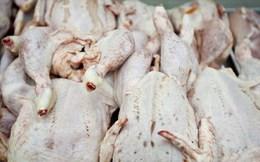 100% gà Trung Quốc nhập vào Việt Nam là trái phép