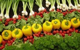 Nông nghiệp hữu cơ: Thời cơ đã đến?