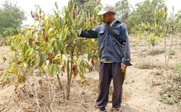 Hàng ngàn nông dân lo trắng tay, vỡ nợ vì hạn hán
