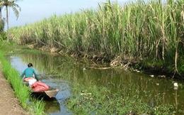 Phá đập đưa nước mặn vào nuôi tôm, hại nhiều hơn lợi