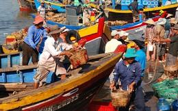 Ngư dân Ninh Thuận trúng vụ cá đầu năm