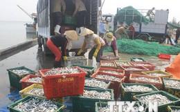 Vụ cá chết hàng loạt: Có thể xử lý hình sự nếu Formosa gây ô nhiễm