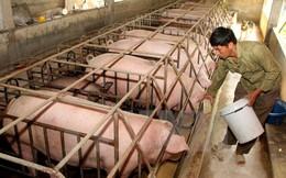 Cục Chăn nuôi khuyến cáo không nên quá kỳ vọng thị trường Trung Quốc