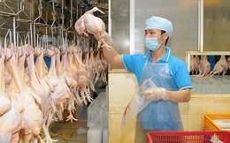 Thịt gà chế biến của Việt Nam có thể được xuất khẩu sang Nhật Bản