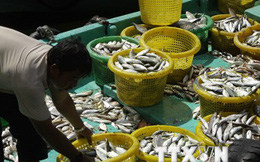 Tập đoàn chế biến hải sản Thái Lan lập liên doanh tại Việt Nam
