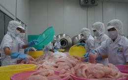 Xuất khẩu cá tra năm nay có thể vượt 5 - 7% so với kế hoạch