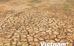 """New Zealand hỗ trợ người dân Bến Tre 50.000 USD để """"cứu khát"""""""