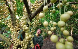 """Hoa quả từ vườn đến chợ chênh """"khủng"""", nông dân khóc ròng?"""
