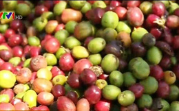 Xuất khẩu nông sản vào Trung Quốc tăng mạnh