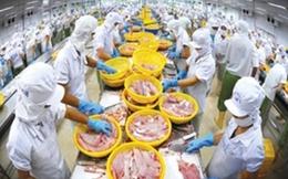 Yêu cầu Úc làm rõ DN xuất khẩu cá diêu hồng nhiễm kháng sinh