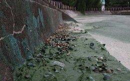 [Video]: Kinh hãi nhìn hồ Văn Quán ô nhiễm nặng nề, bốc mùi nồng nặc