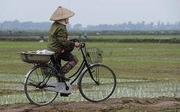 Hàng loạt đối tượng được miễn thuế đất nông nghiệp