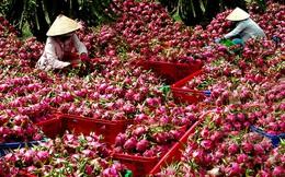 Việt Nam là nước đầu tiên được cấp phép xuất khẩu thanh long vào Australia