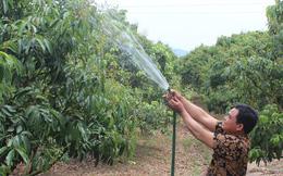 Bắc Giang áp dụng nhiều giải pháp tăng chất lượng vườn vải thiều