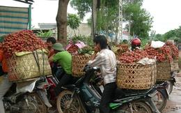 Vải thiều Bắc Giang được giá, thị trường tiêu thụ không quá khó
