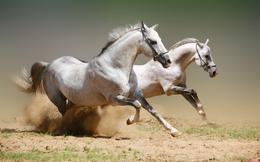 3 bài học cuộc sống đắt giá tôi rút ra được từ việc nuôi ngựa