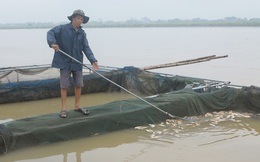 Thủy điện Hòa Bình xả lũ: Hàng tấn cá vùng hạ du chết trắng