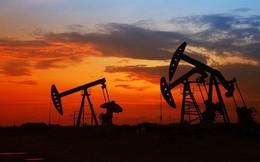 Kinh tế vùng Vịnh gần như tê liệt vì giá dầu giảm