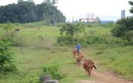 """Để khu công nghệ cao không phải """"trồng cỏ"""", nuôi bò!"""