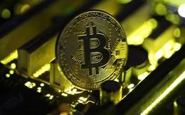 Bitcoin lao dốc vì nhà đầu tư ào sang bitcoin cash