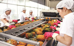 Cơ hội mở rộng thị trường cho rau quả Việt Nam