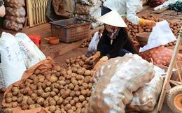 Khan hiếm hàng, Đà Lạt nhập 100 tấn khoai tây Trung Quốc