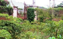 Dân Lâm Đồng đổ xô trồng đinh lăng, cẩn trọng kẻo 'tiền mất, tật mang'