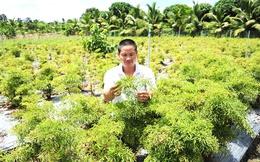 Thu tỷ đồng/năm từ trồng cây dược liệu ở Hồng Ngự