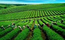Chỉ trong 3 năm, giá trị xuất khẩu tỉnh này tăng 80 lần, gần bằng Bắc Ninh và trở thành hiện tượng