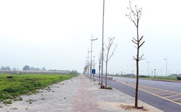 Nhiều cây xanh mới trồng chết khô trên vỉa hè Hà Nội