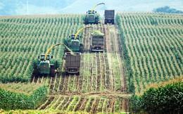 Sắp có chính sách ưu đãi về đất cho doanh nghiệp làm nông nghiệp?