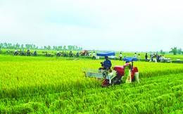 Các ông lớn rẽ ngang làm nông: Mảnh đất màu mỡ cho các công ty cung cấp dịch vụ nông nghiệp