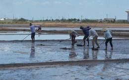 Bến Tre tồn 64.000 tấn muối, diêm dân đang 'méo mặt'