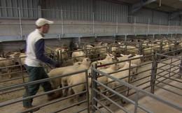 Vấn đề Brexit: Những tác động đối với ngành nông nghiệp Anh
