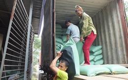 Miền Bắc thất thu vụ mùa, giá gạo tăng chóng mặt