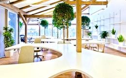 5 cách giúp văn phòng của bạn trở thành một không gian xanh hơn