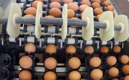 Châu Âu rối bời vì bê bối trứng bẩn