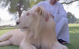 """Cuộc sống đầy trải nghiệm của hoàng tử Dubai """"triệu người theo dõi"""""""