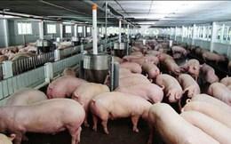 Lối thoát nào cho cuộc 'khủng hoảng' thịt lợn?