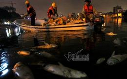 Chủ tịch quận Đống Đa: Cá chết hồ Hoàng Cầu do thời tiết