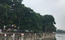 Hà Nội chặt, chuyển 130 cây xanh trên đường Kim Mã