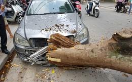 Vì sao trời không mưa câyxanh vẫn đổ đè nát đầu ô tô trên phố Hà Nội?