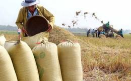 """Nông dân làm lúa gạo không thể """"tự bơi"""" trong cơ chế thị trường"""