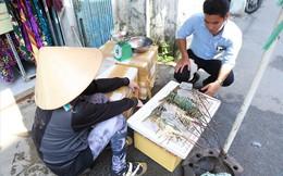 Gánh tôm hùm vùng tâm bão đến TPHCM bán giá rẻ