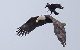 Chuyện chim sẻ và đại bàng: Ai cũng có 1 đôi tay, 1 cái miệng và 1 cái đầu, nhưng không phải ai cũng biết sử dụng chúng đúng lúc đúng chỗ