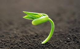 """Một doanh nghiệp """"hồi sinh"""" đặt kế hoạch lợi nhuận gấp 50 lần, cổ phiếu mới tăng 20%"""