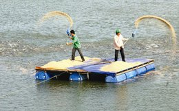 Không phải bất động sản, mà thức ăn cho cá mới mang lại phần lớn doanh thu cho Sao Mai Group